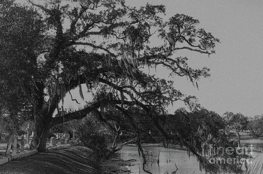 Southern Tree Splendor And Glory Photograph