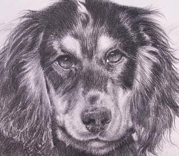 Pencil Portrait Painting - Spaniel Detail by Keran Sunaski Gilmore