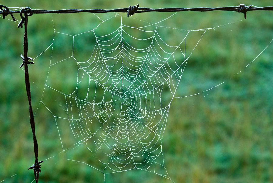 Spider Photograph - Spider Web In The Springtime by Douglas Barnett