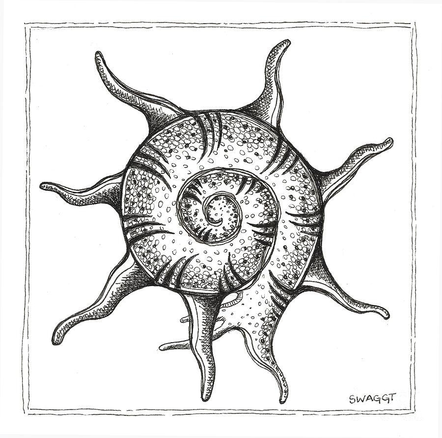 Coastal Art Drawing - Spiney Nautilus by Stephanie Troxell