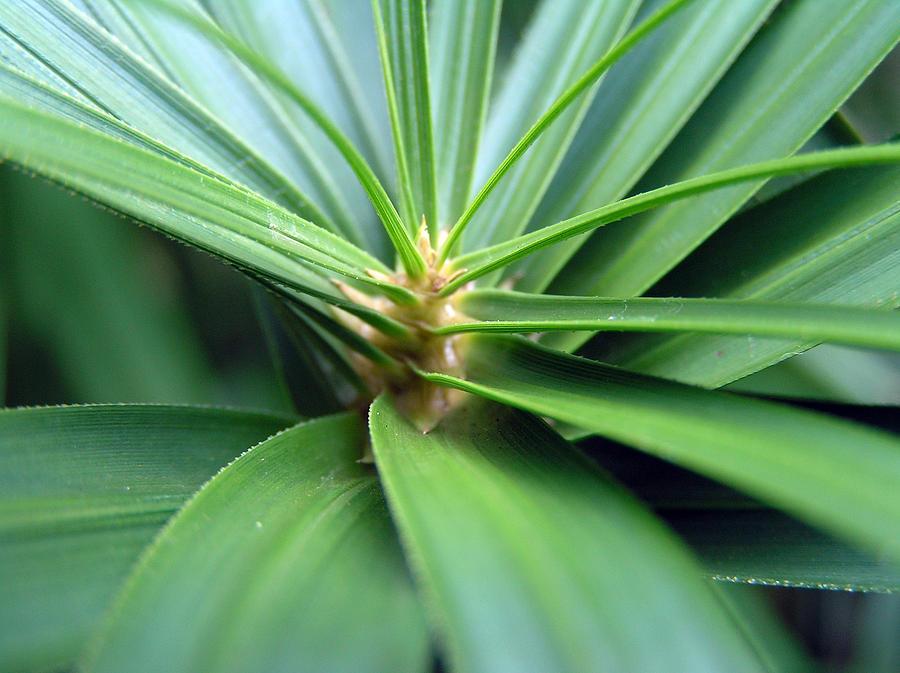Plant Green Spiral Leaves Charleston Sc Dustin  Photograph - Spiral Leaves by Dustin K Ryan
