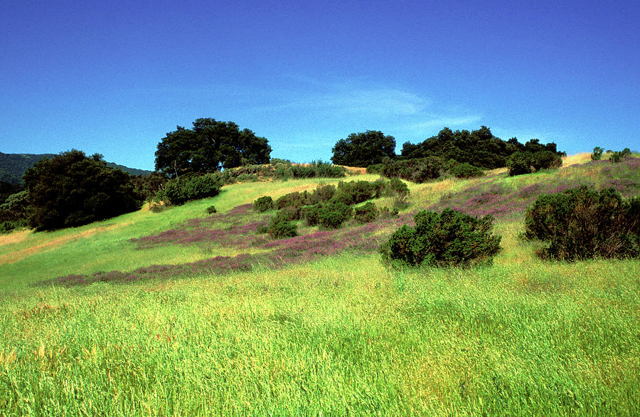 Landscapes Photograph - Splendor In The Grass by Kathy Yates