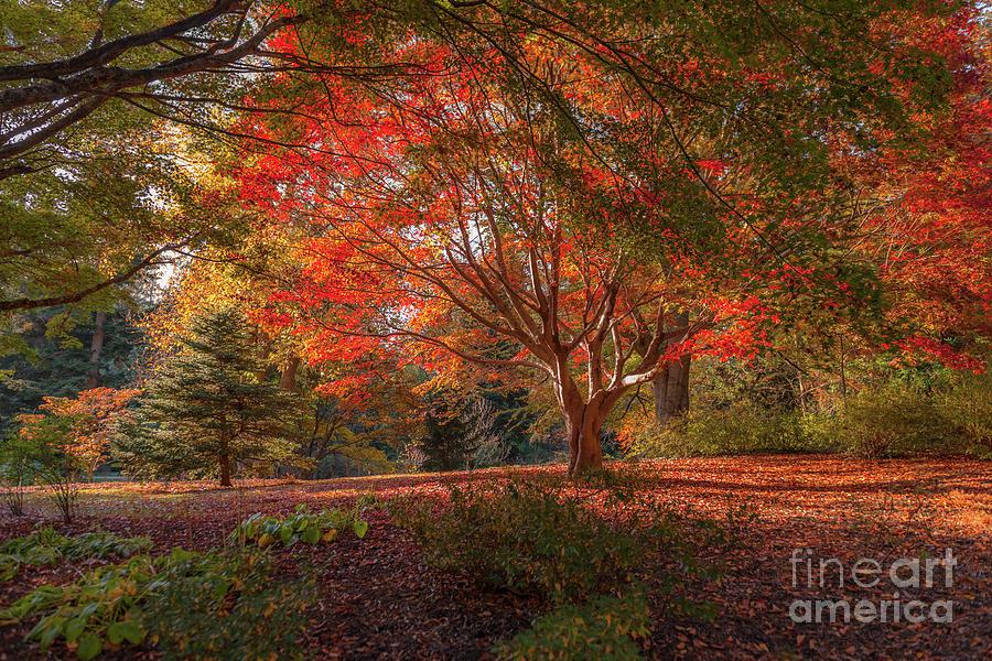 Splendor Of Autumn At Biltmore Photograph