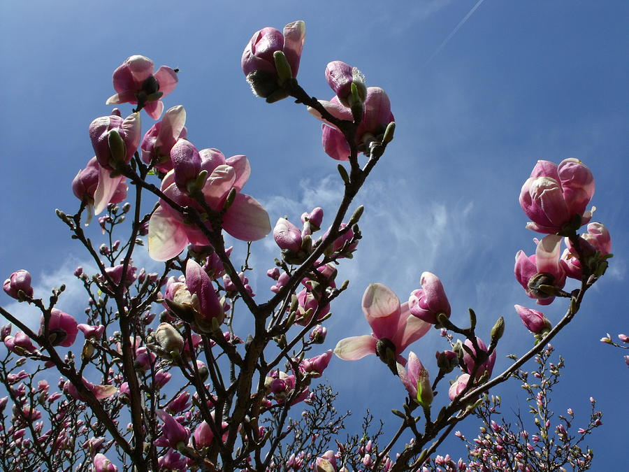 Spring Photograph - Spring Blooms 2010 by Anna Villarreal Garbis