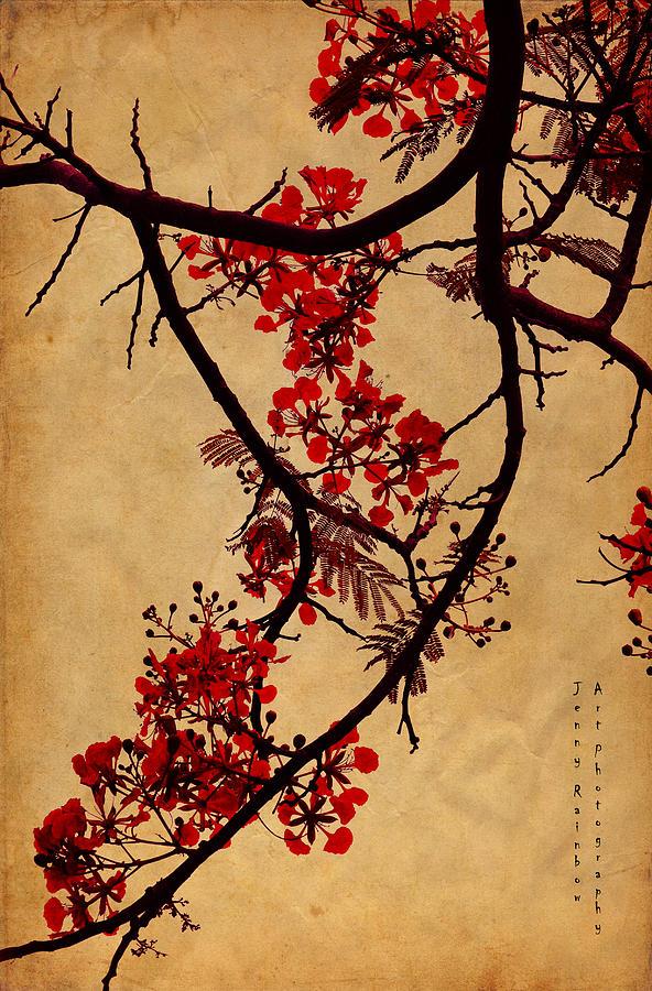Spring Photograph - Spring Bloosom In Maldives. Flamboyant Tree I.  Japanese Style by Jenny Rainbow