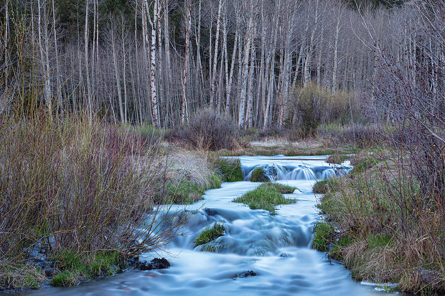 Spring Melt Off Flowing Down From Bonanza Photograph
