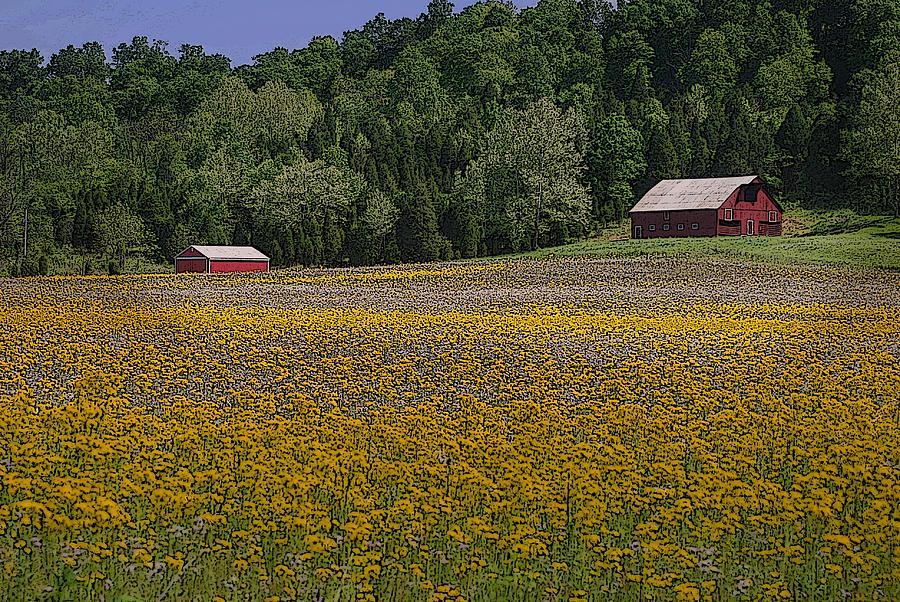 Barn Photograph - Spring Mustard And Barns by Rick DeCroes