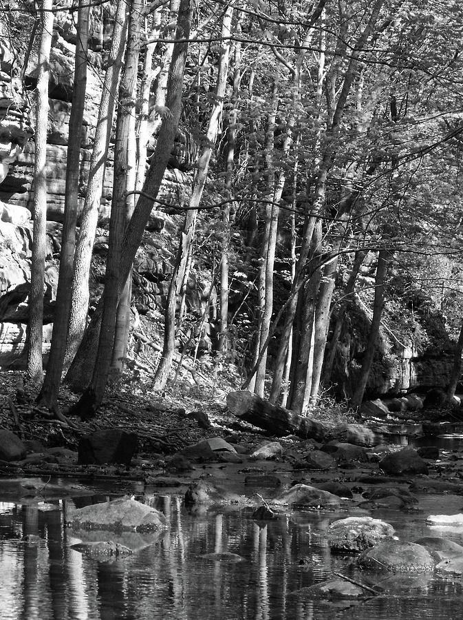 Forest Photograph - Spring Stream by Anna Villarreal Garbis