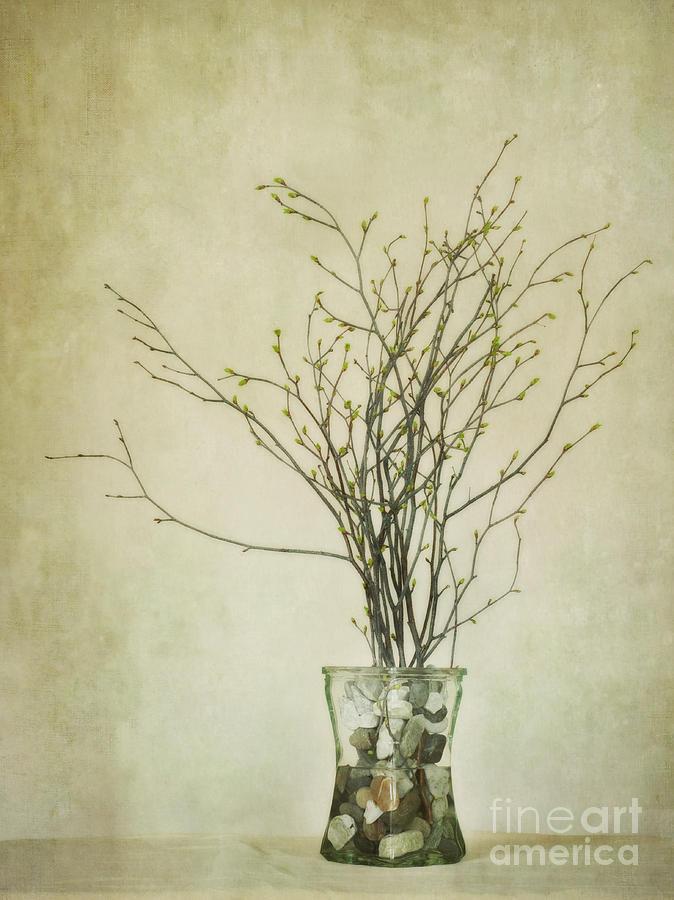 Birch Twigs Photograph - Spring Unfolds by Priska Wettstein