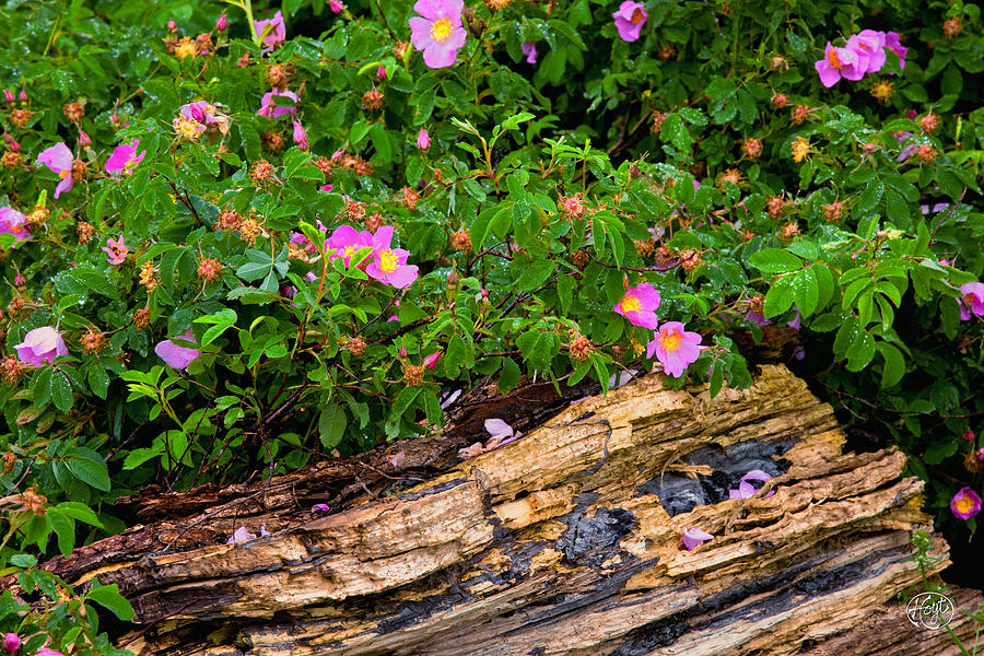 Flowers Photograph - Springtime In New York by Brad Hoyt