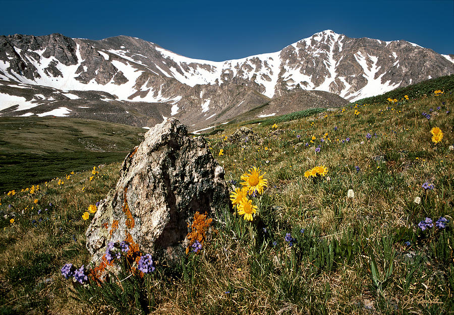 Colorado Photograph - Springtime In The Rockies by Joe Bonita