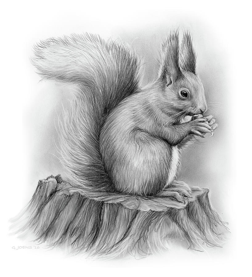 Beautiful Nature Pencil Drawings: Squirrel Drawing By Greg Joens