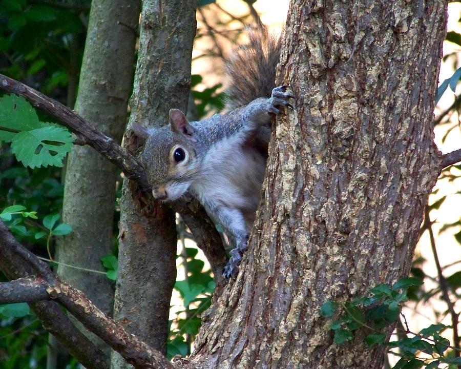 Squirrel Photograph - Squirrel I by Jai Johnson