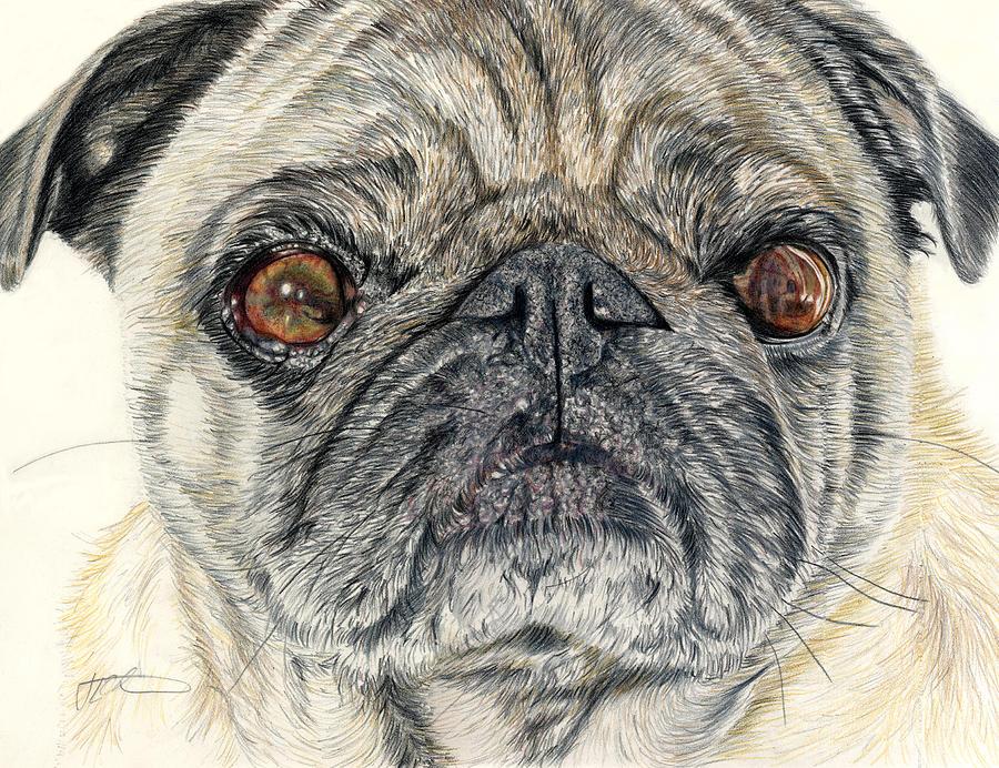 Dogs Drawing - Stanley by Joanne Stevens