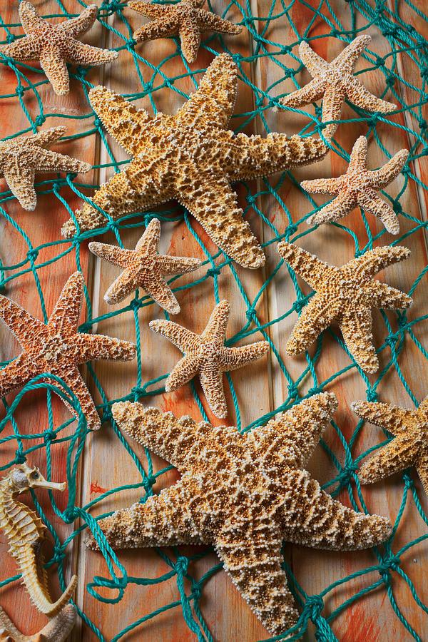 Starfish Photograph - Starfish In Net by Garry Gay