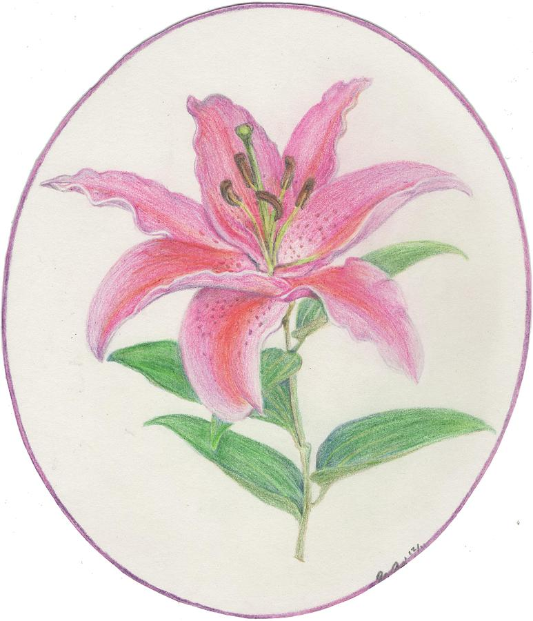Flower Drawing - Stargazer Lily by Joanna Aud