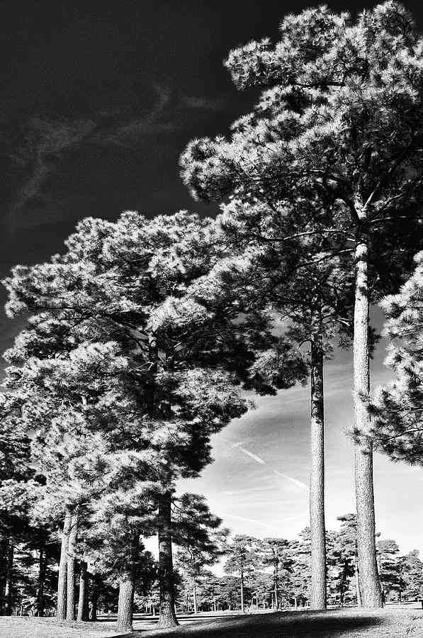 Nature Photograph - Stillness by Gerlinde Keating - Galleria GK Keating Associates Inc