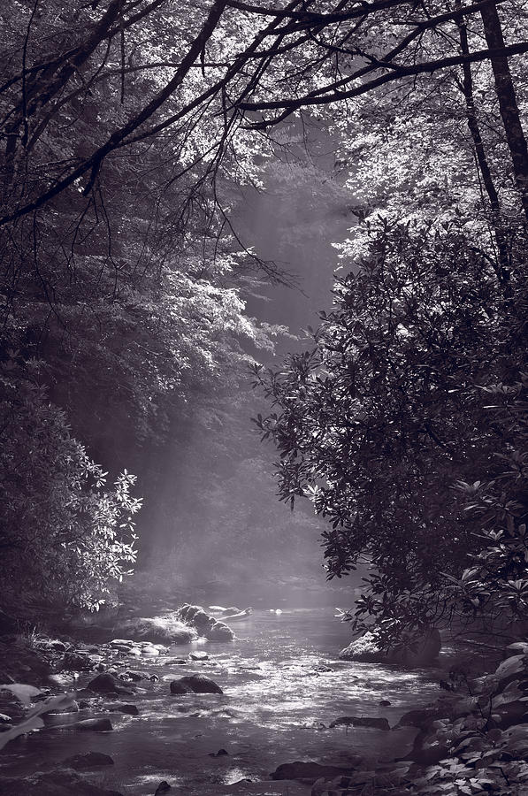 Blueridge Photograph - Stream Light B W by Steve Gadomski