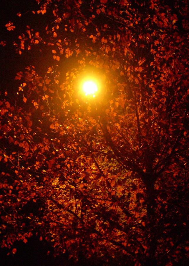 Lamp Photograph - Streetlamp Through Tree by Utopia Concepts