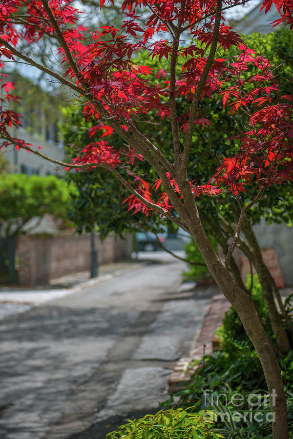 Strolling Charleston Back Alleys In The Spring Photograph