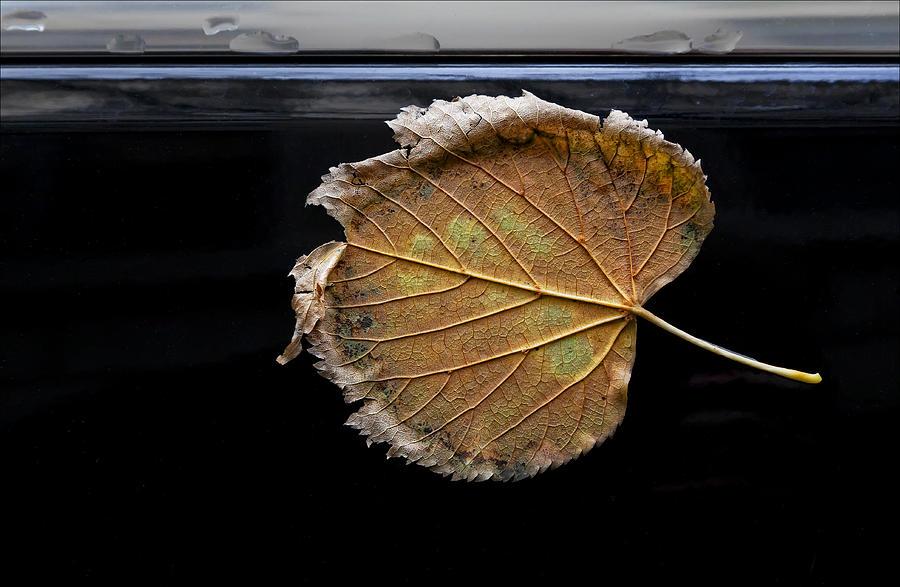 Leaf Photograph - Stuck On You by Robert Ullmann