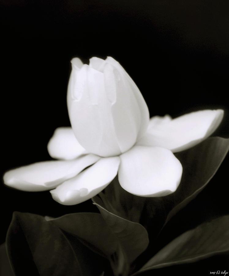 Summer Fragrance Photograph