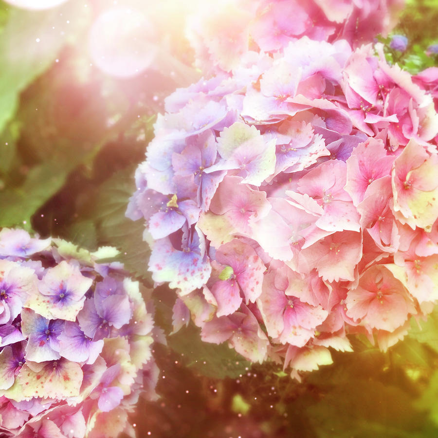 Summer Garden Photograph