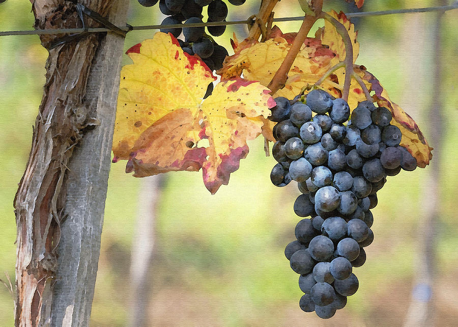 Grapes Digital Art - Summer Grapes by Sharon Foster