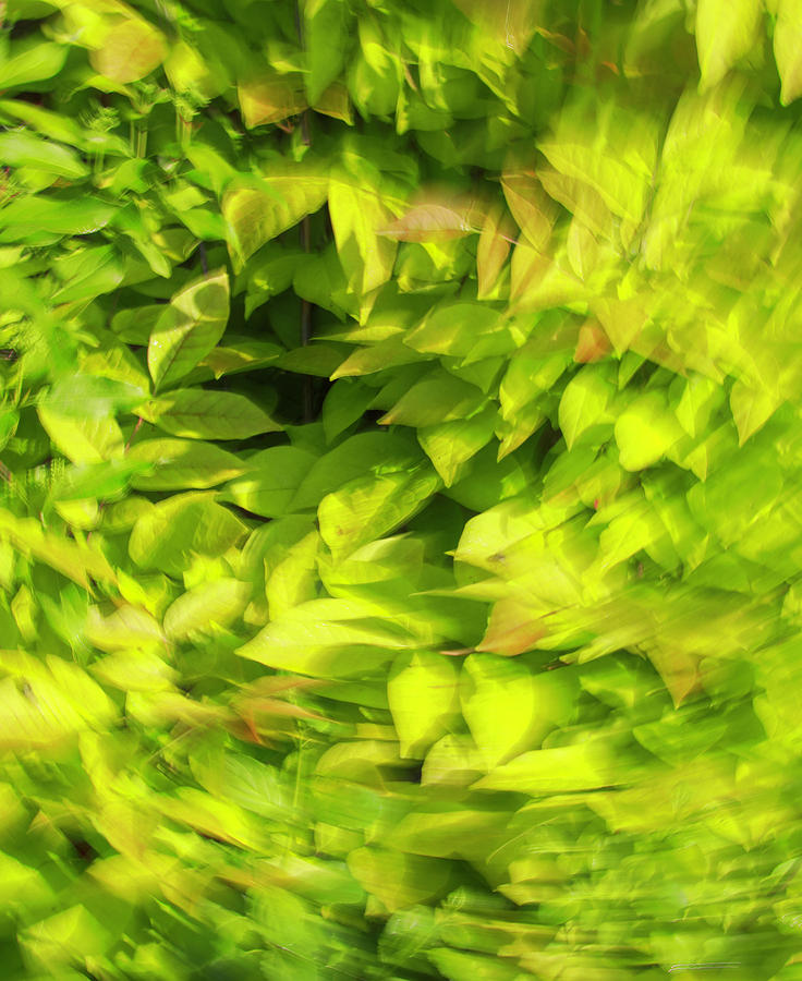 Summer Green Blur Photograph