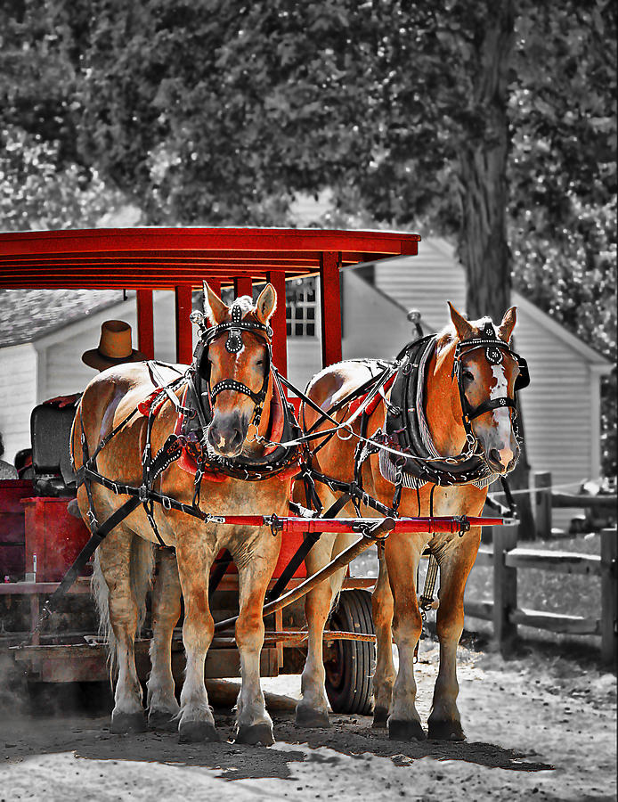 Carriage Photograph - Summer Ride by Evelina Kremsdorf