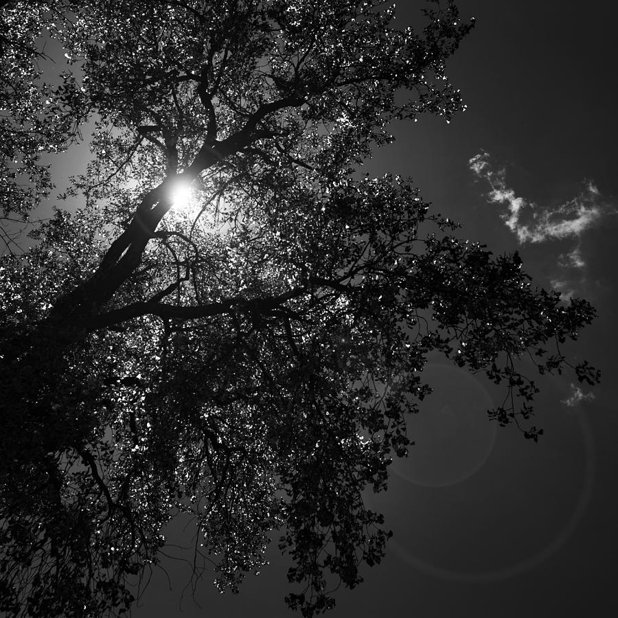 sunlight through trees black - photo #23
