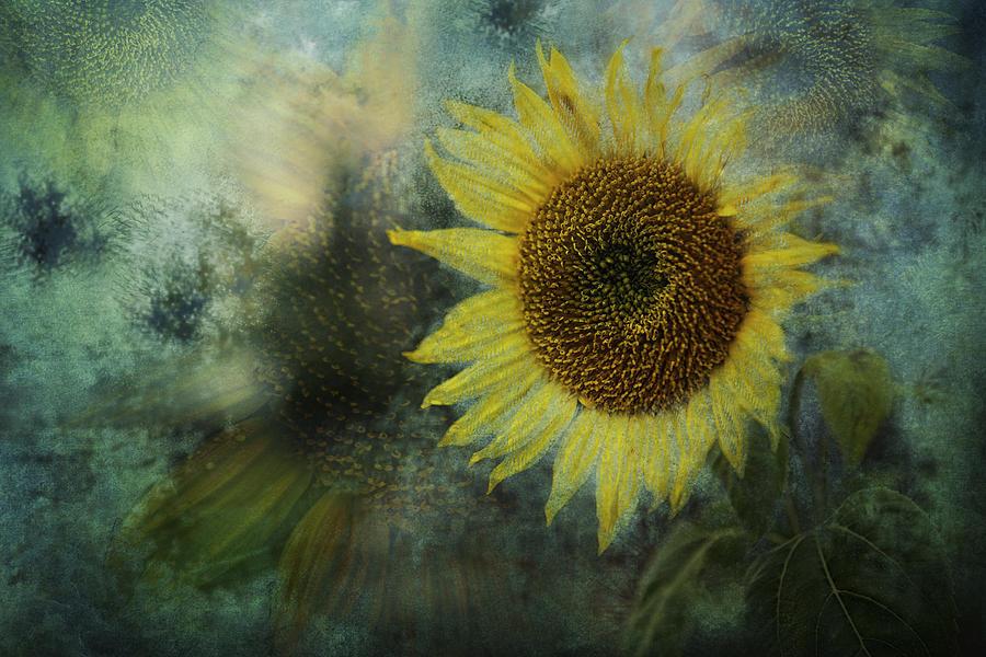 Sunflower Photograph - Sunflower Sea by Belinda Greb