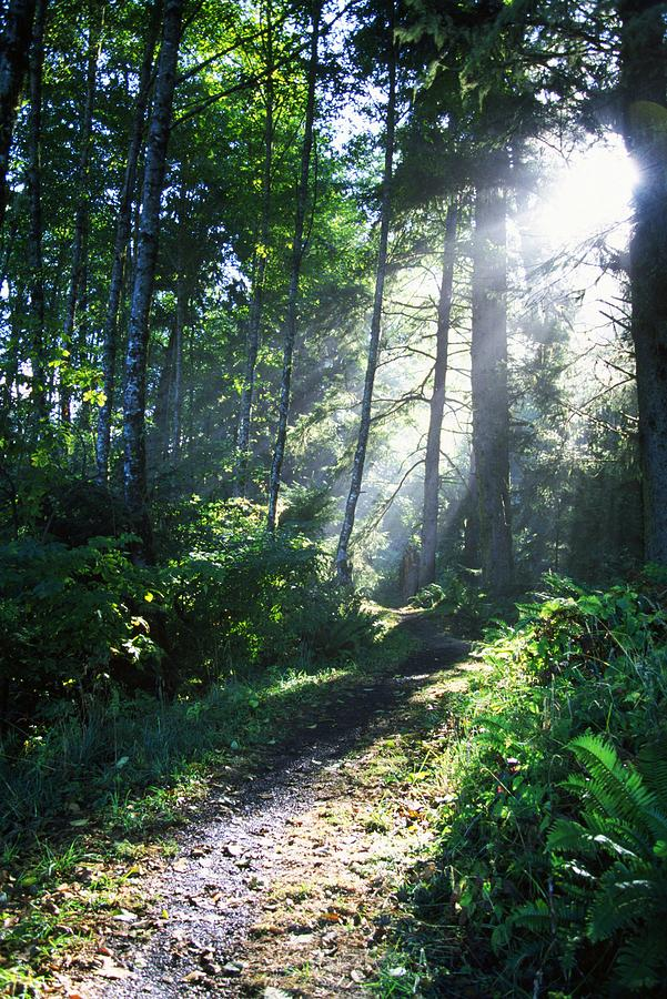 Pathway Photograph - Sunlight Through Trees, Ecola State by Natural Selection Craig Tuttle