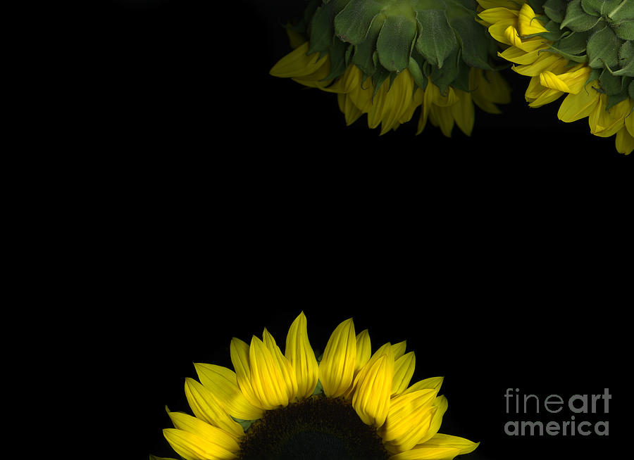 Scanograph Photograph - Sunrise by Christian Slanec