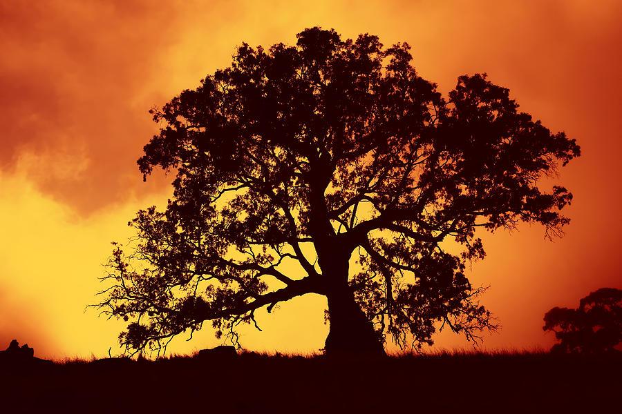 Gum Tree Photograph - Sunrise Gum by Mike  Dawson