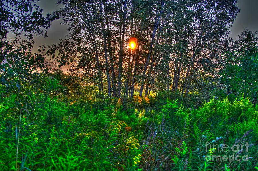 Related Tags: Photograph - Sunrise In The Swamp-4 by Robert Pearson
