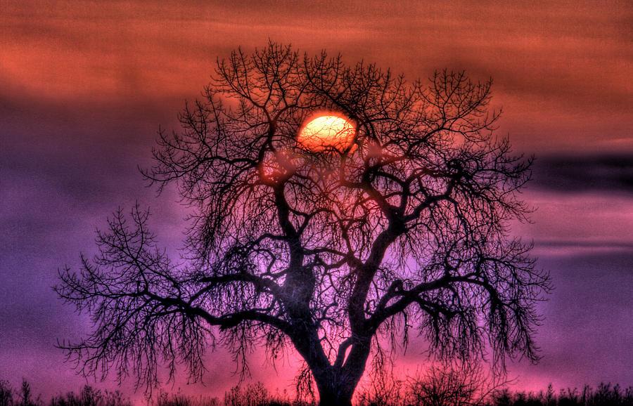 Sunrise Photograph - Sunrise Through The Foggy Tree by Scott Mahon