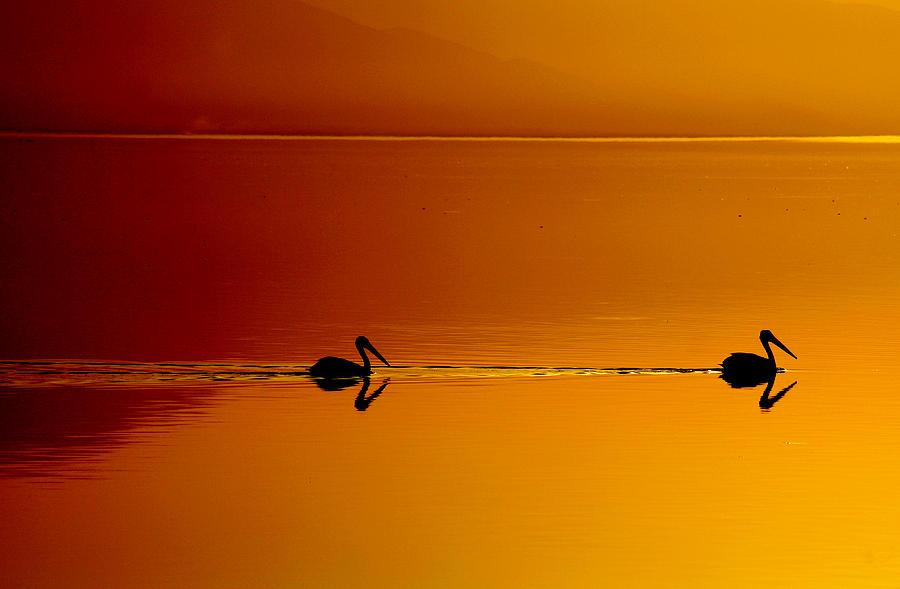 Sunset Cruising Photograph