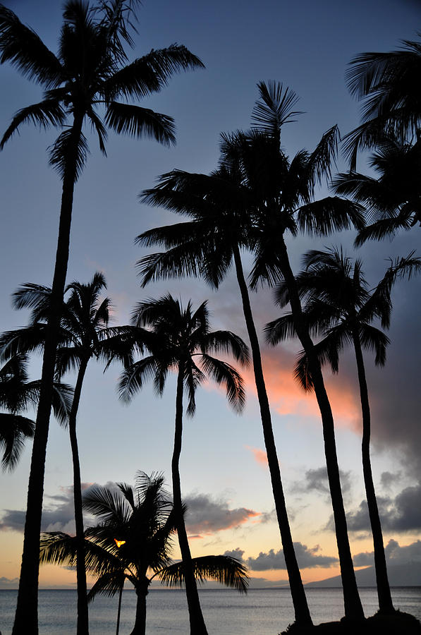 Sunset Palms Napili Bay Maui Hawaii Silhouettes Landscape Photograph - Sunset Palms by Kelly Wade