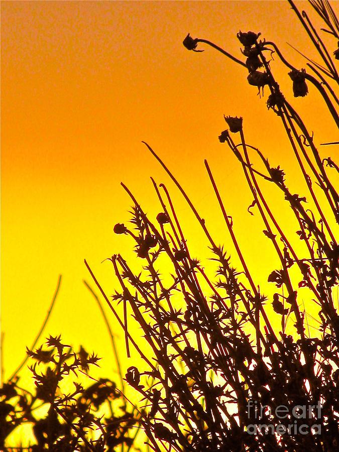 Sunset Sand-doons  Photograph