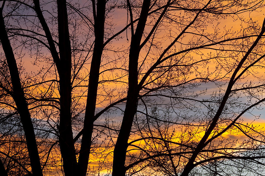 Silhouette Photograph - Sunset Through The Tree Silhouette by James BO  Insogna
