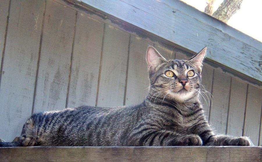Cat Photograph - Sunshine On My Shoulder by Nicole I Hamilton