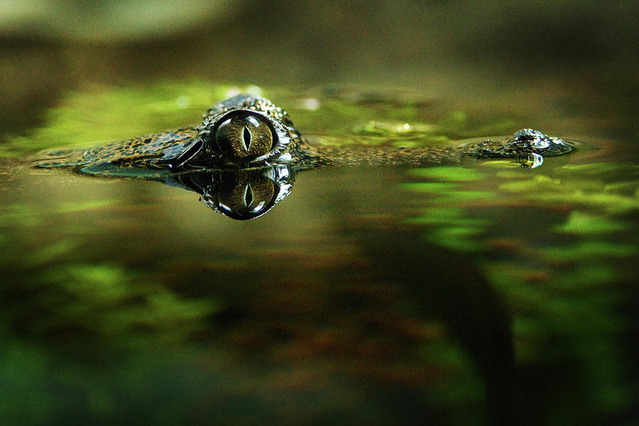 Surface Tension Photograph