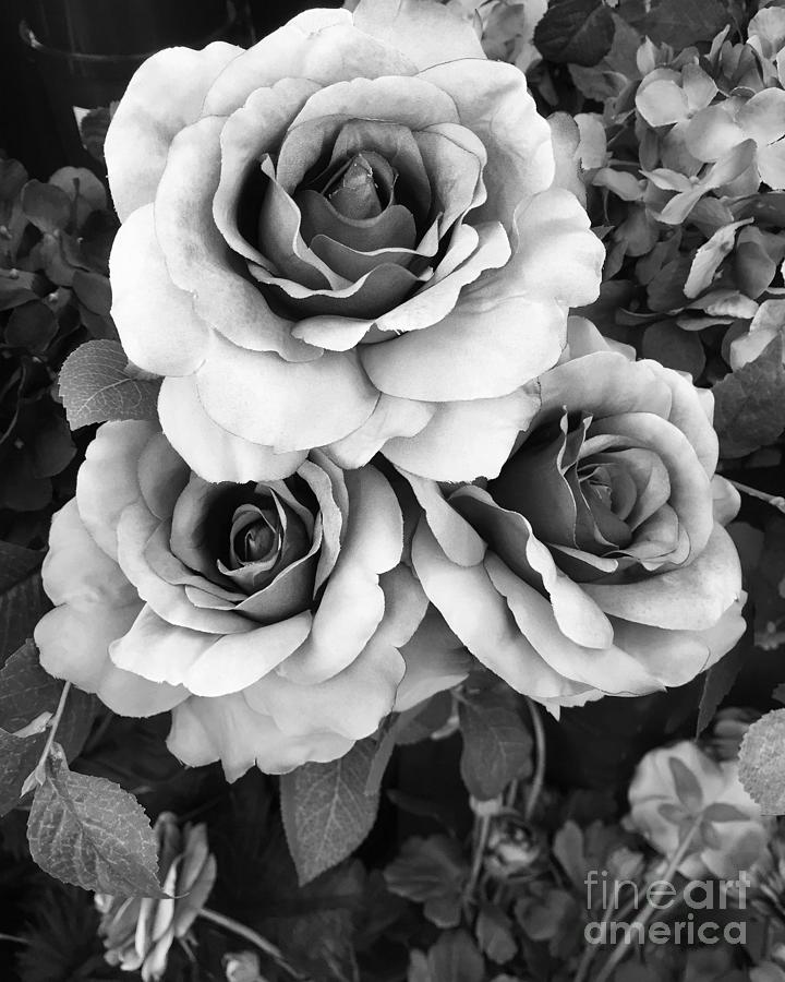 Surreal Black And White Roses