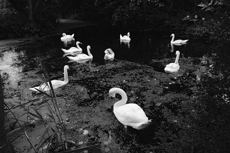 Swan Family Photograph