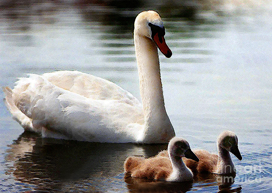 Abstract Photograph - Swan Family by Terril Heilman