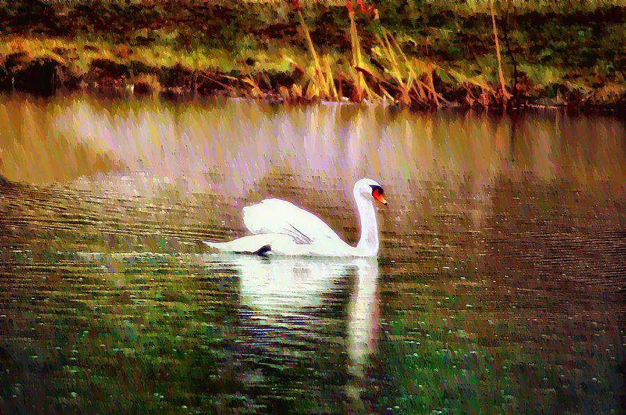 Swan Photograph - Swan Lake by Bill Cannon