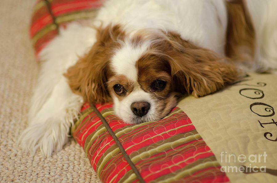 Sweet Dog Face Photograph