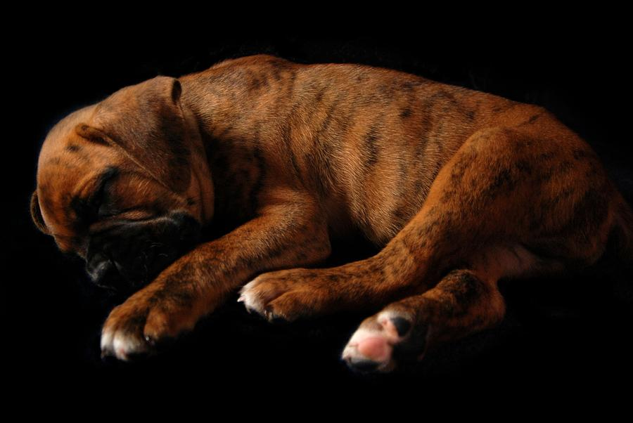 Sweet Dreams Puppy Photograph