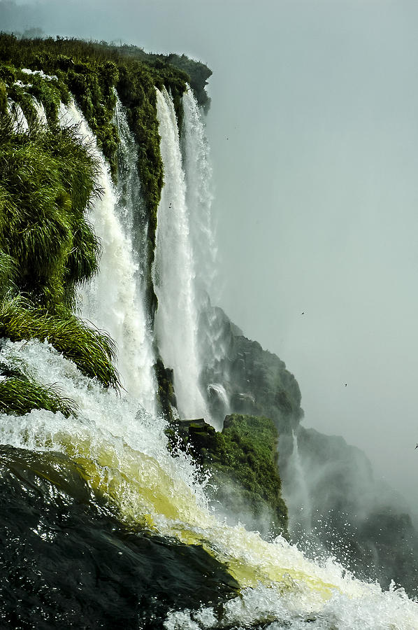 Swift sanctuary photograph by norman johnson for Johnson johnson argentina